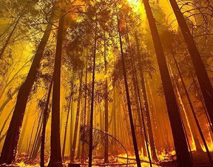 Amazonie, Australie, quand la Terre se meurt à grands feux